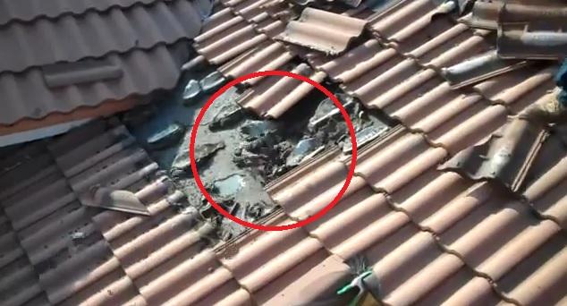 Fledermäuse unter dem Dach